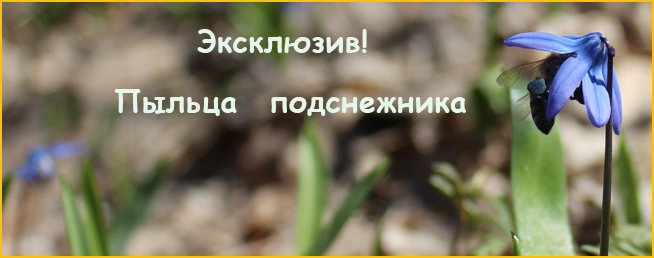 Семейная пасека Рудниковых